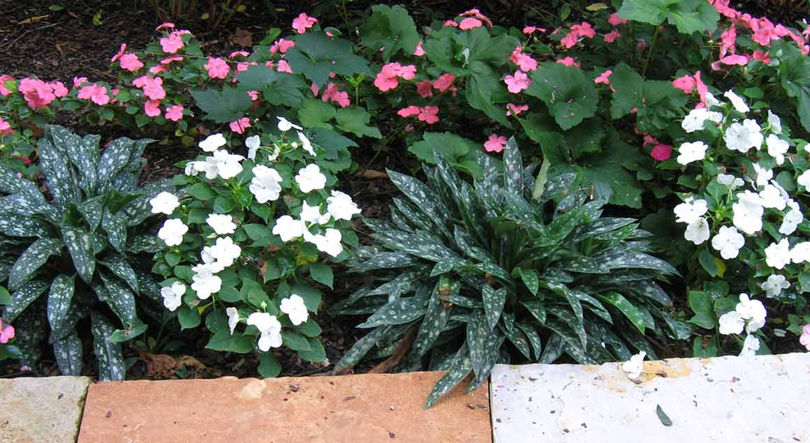 West County Facade Plantings