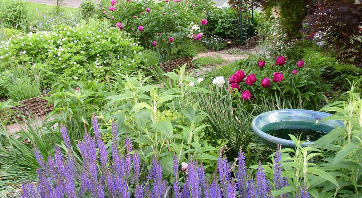 Webster Groves Cottage Garden