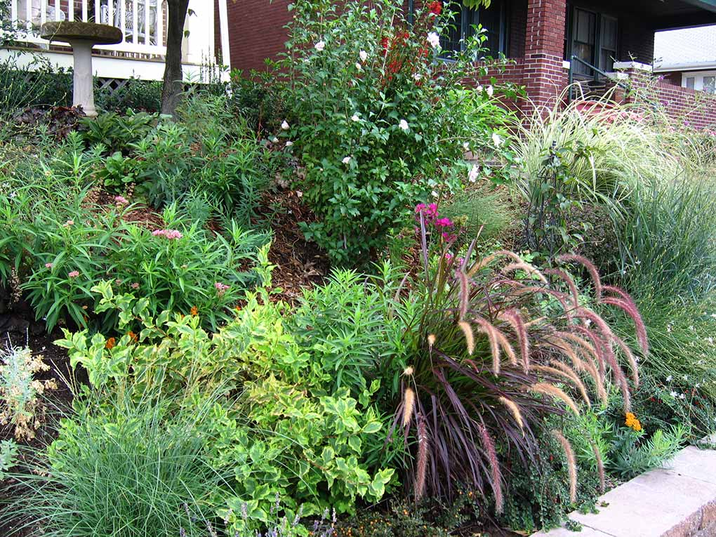 South City Front Yard Planting