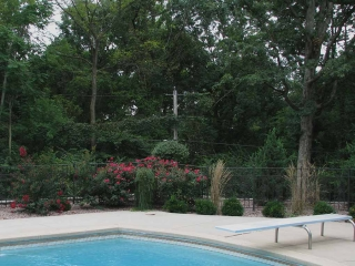 West County Poolside Plantings
