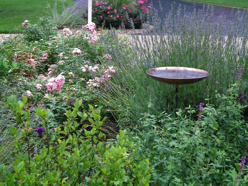 Webster Groves Cul-de-sac Hummingbird Garden
